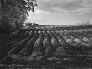 Furrows by Martin Henson