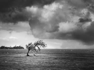 Misty Weather V by Martin Henson
