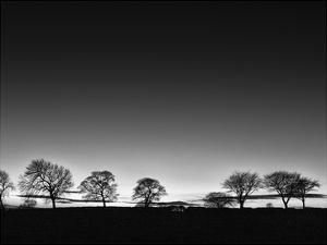 Treeline Light by Martin Henson