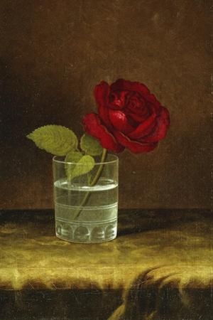 A Red Rose by Martin Johnson Heade