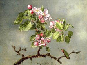 Apple Blossoms and a Hummingbird, 1875 by Martin Johnson Heade
