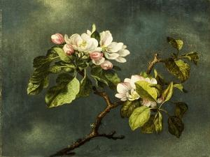 Apple Blossoms by Martin Johnson Heade