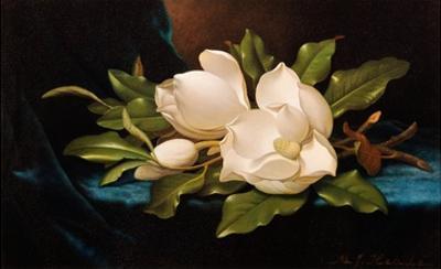 Giant Magnolias on Blue Cloth by Martin Johnson Heade