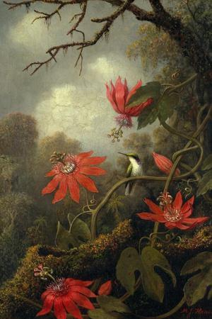 Hummingbird and Passionflowers, c.1875–85