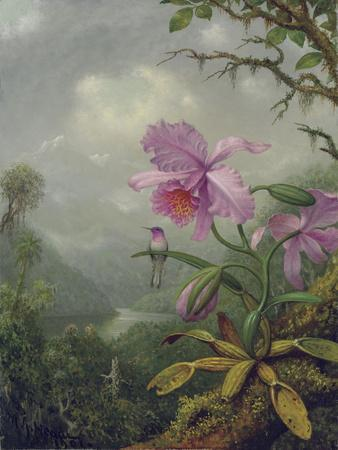 Hummingbird Perched on an Orchid Plant, 1901