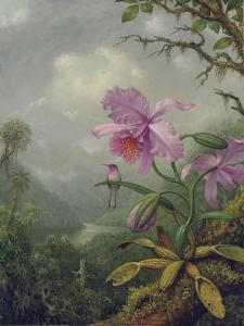 Hummingbird Perched on an Orchid Plant, 1901 by Martin Johnson Heade