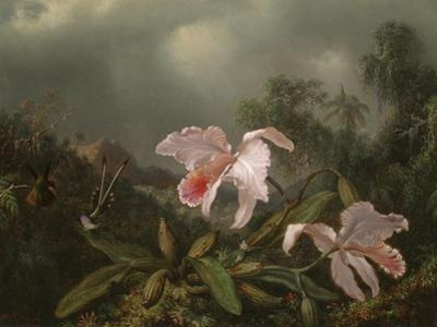 Jungle Orchids and Hummingbirds, 1872 by Martin Johnson Heade