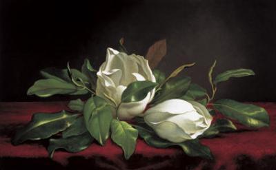 Magnolia Buds by Martin Johnson Heade
