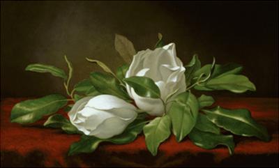 Magnolia by Martin Johnson Heade