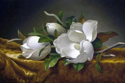 Magnolias on Gold Velvet Cloth by Martin Johnson Heade