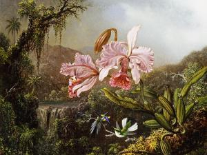 Orchids and Hummingbirds in a Brazilian Jungle, C. 1871-72 by Martin Johnson Heade