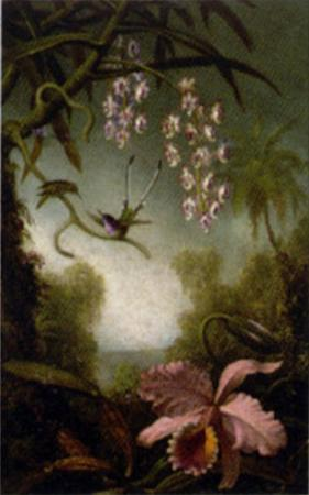 Orchids and Spray Orchids with Hummingbirds by Martin Johnson Heade
