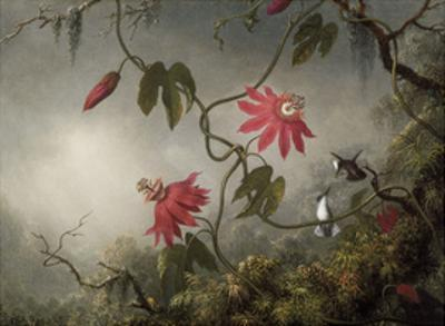 Passion Flowers and Hummingbirds, about 1870-83