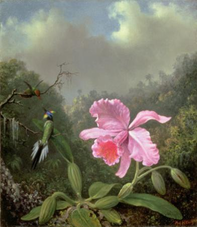 Still Life with an Orchid and a Pair of Hummingbirds, C.1890S by Martin Johnson Heade