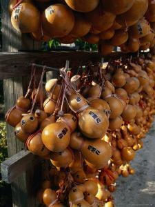 Hollow Gourds Hanging at Shrine, Tokyo, Japan by Martin Moos