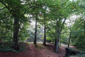 Ambresbury Banks, remains of an Iron Age hill fort in Epping Forest, Essex, England, United Kingdom by Martin Pittaway
