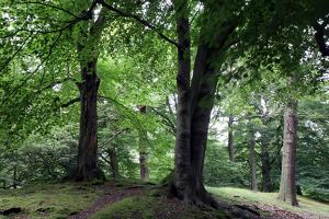 Ambresbury Banksremains of an Iron Age hill fort in Epping Forest, Essex, England, United Kingdom,  by Martin Pittaway