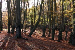 Epping Forest, Epping, Essex, England, United Kingdom, Europe by Martin Pittaway