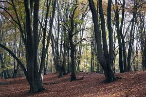 Loughton Camp, an Iron Age Hill fort dating from around 500BC in Epping Forest, Essex, England, Uni by Martin Pittaway