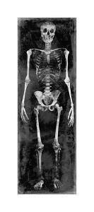 Skeleton II by Martin Wagner