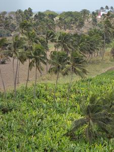 Agriculture near Pedra Badejo. Santiago Island, Cape Verde. by Martin Zwick
