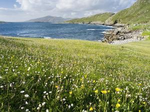 Coastal Wildflowers, Huisinis, Machair. Isle of Harris, Scotland by Martin Zwick