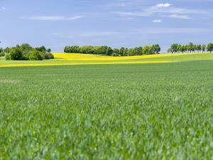 Fields in Thuringia near towns of Muehlhausen and Weberstedt, Germany. by Martin Zwick