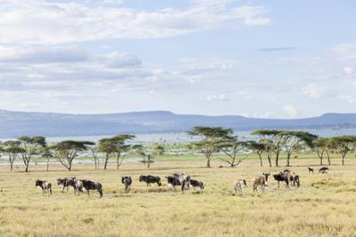 Lake Naivasha and Crescent Island Game Park, Naivasha, Kenya by Martin Zwick