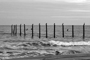Beach Scene at Outer Banks by Martina Bleichner