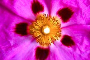 Pink Blossom by Martina Bleichner
