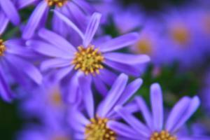 Violet Flowers by Martina Bleichner