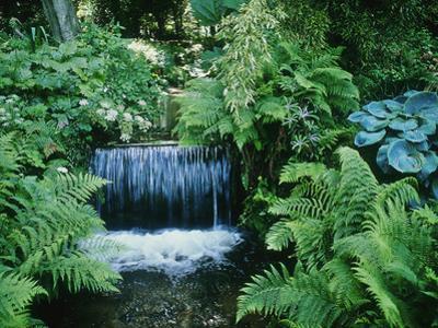 Shallow Waterfall and Stream Shady Planting of Hosta, Fern Fernhill, Ireland (Near Dublin)