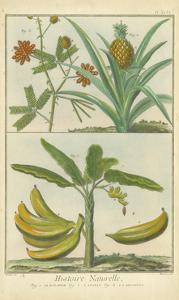 Histoire Naturelle Tropicals II by Martinet