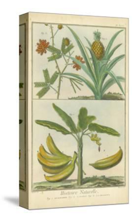 Histoire Naturelle Tropicals II