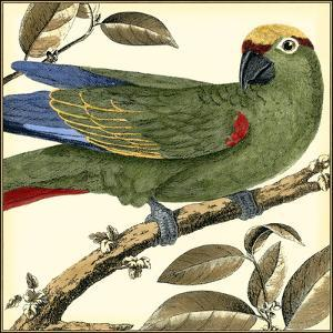 Tropical Parrot I by Martinet