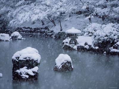 Maruyama Park--Photographic Print