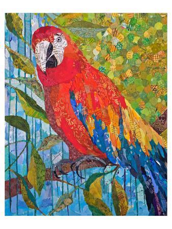 https://imgc.artprintimages.com/img/print/marvelous-macaw_u-l-f7p4s40.jpg?p=0