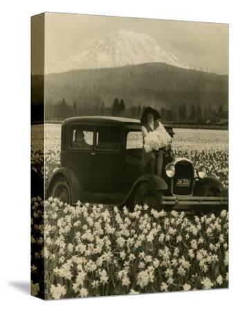 Daffodil Field, Automobile and Mount Rainier, ca. 1929