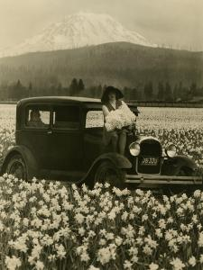 Daffodil Field, Automobile and Mount Rainier, ca. 1929 by Marvin Boland