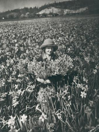Flowers in Puyallup, 1925