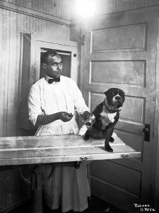 Veterinary Care of Dog, 1921 by Marvin Boland