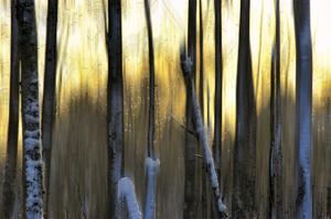 The Forest at Dawn by Marvin Pelkey