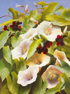 Convolvulus and Blackberries by Mary Dipnall