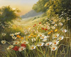 Evening Sun by Mary Dipnall