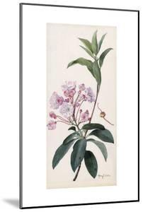 A Branch Sprig and Blossom from a Mountain Laurel Shrub by Mary E. Eaton