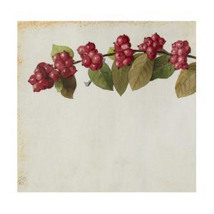 A Sprig of Coralberry Shrub Blossoms and Berries by Mary E. Eaton