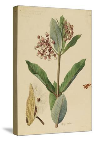 This Plant Is a Member of the Milkweed Family