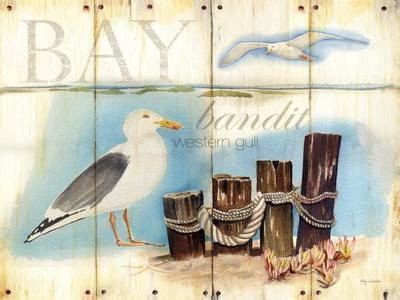 Bay Gull