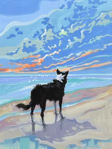 Border Collie At Sunset by Mary Kemp