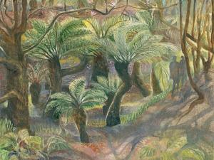 Tree Ferns, Trewidden by Mary Kuper